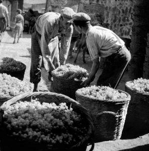 Factor of raisins in Greece